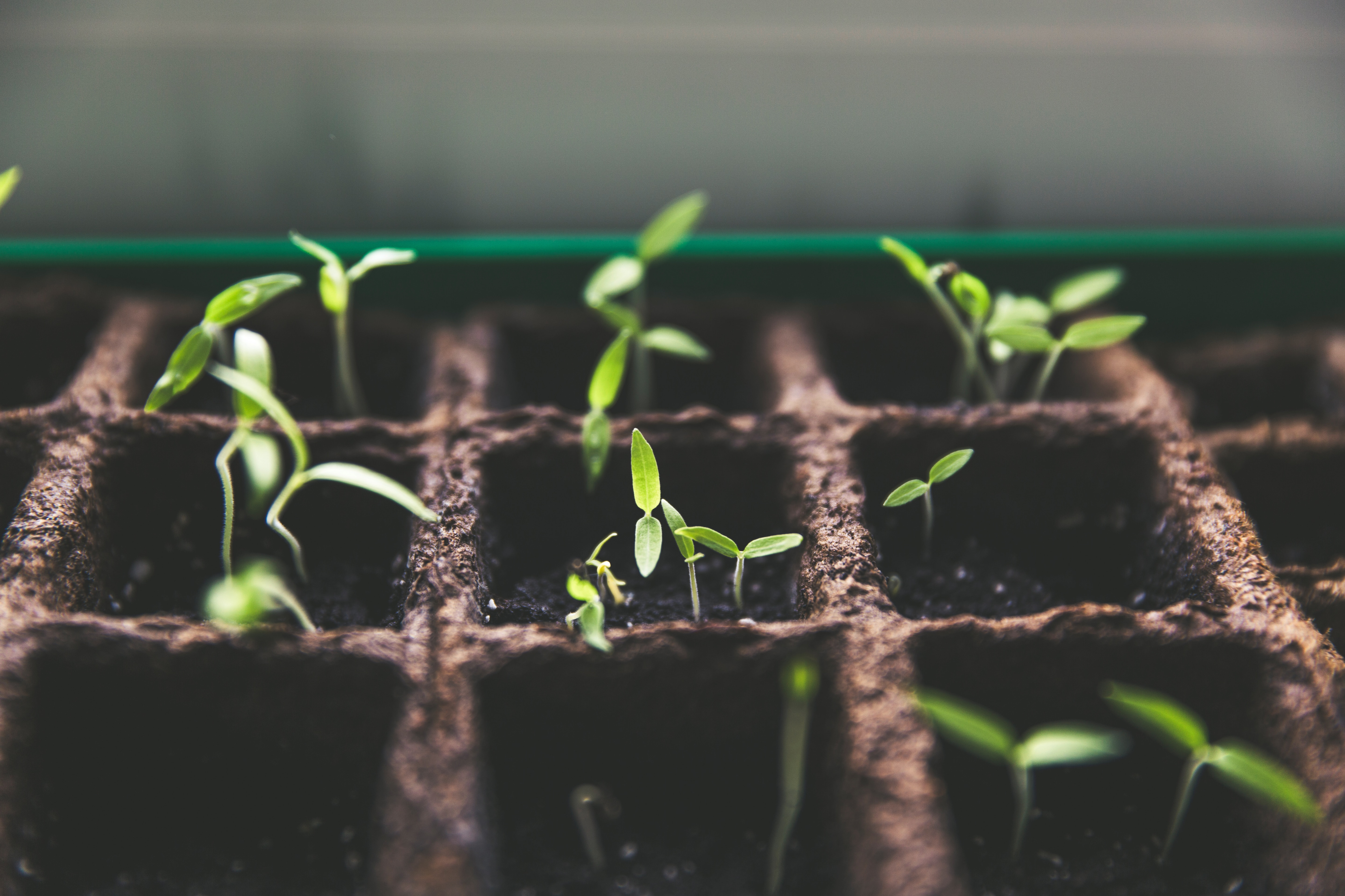 How do you want your seeds to sprout?