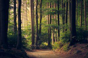 Our Innate Nature